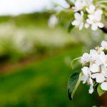 DAYFOTOGRAFI_rudu_blom2-107